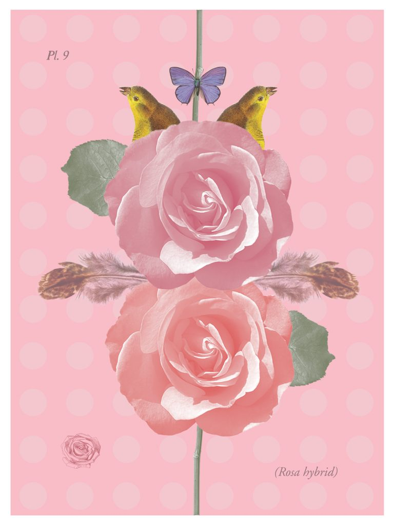 RoseWings poster by Jane Mueller