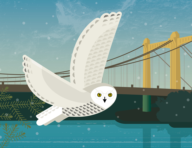 Illustration of a snowy owl flying in front of the Hennepin Avenue Bridge in downtown Minneapolis
